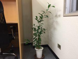 自習室鶴見 観葉植物
